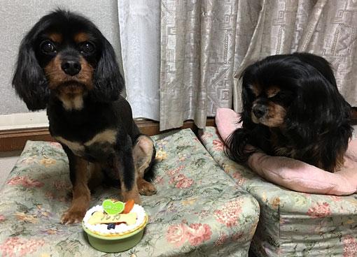 ルカ誕生日